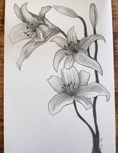 Tekening van de Lilium bulbiferum