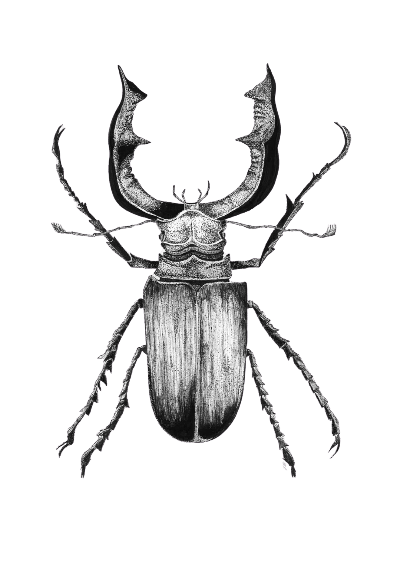 Tekening in zwart wit van een vliegend hert kever
